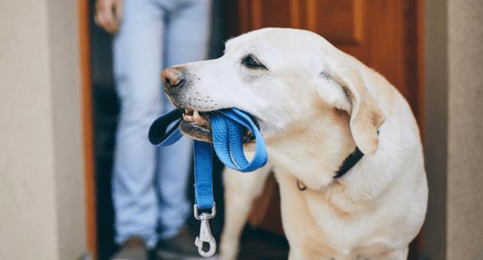 perros ascensor